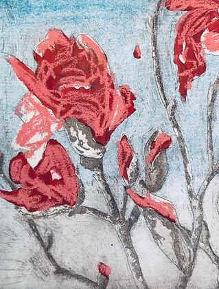 Armidale magnolias IV x