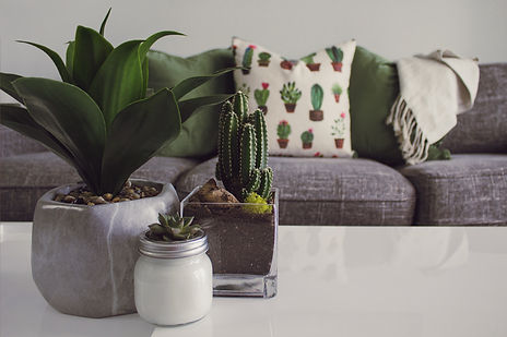 photo-of-plants-on-the-table-1005058.jpg