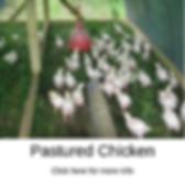 picforwebsite.PNG