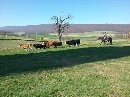 Fun Fall Pics from the Farm