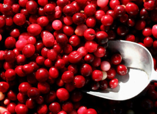 Cranberries – not just a tasty treat! (Holiday Punch Recipe too!)