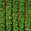 Thumbnail: Лента из мха (10 см)  3 метра.