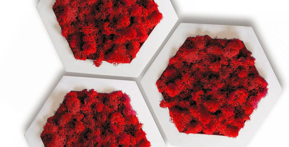 Комлект фитокартин Шестиугольник d20, 3шт. в белой раме. Красный мох.