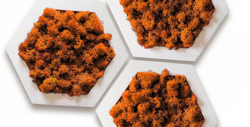 Комлект фитокартин Шестиугольник d20, 3шт. в белой раме. Оранжевый мох.
