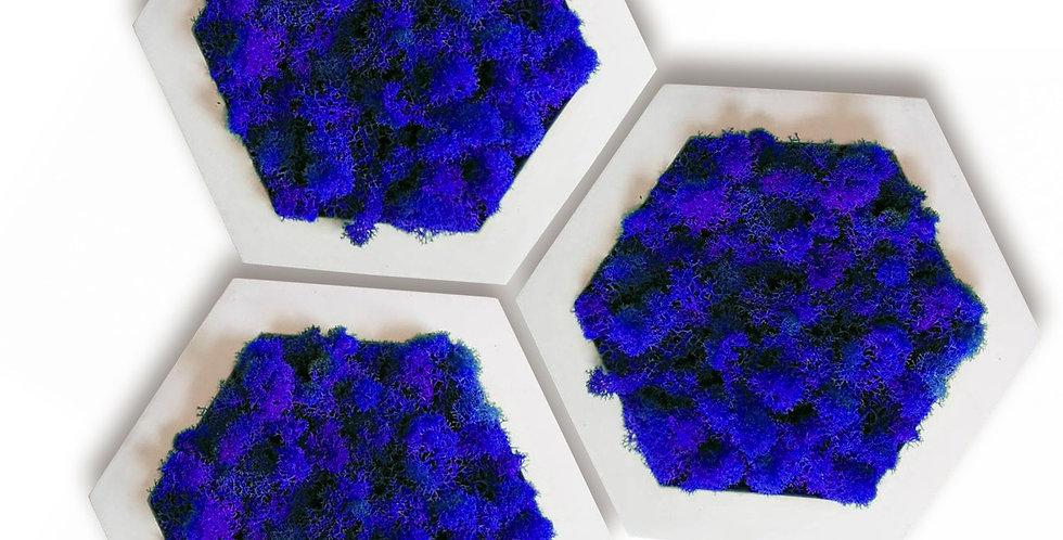 Комлект фитокартин Шестиугольник d20, 3шт. в белой раме.Синий мох.