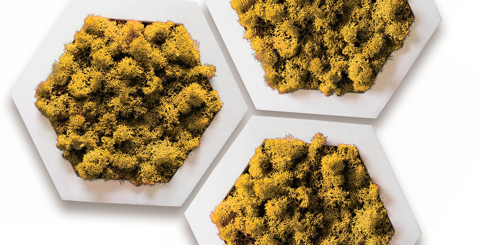Комлект фитокартин Шестиугольник d20, 3шт. в белой раме. Желтый мох мох.