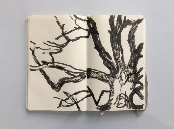 Observational Sketchbook Drawing of a Tree by Jo Blaker