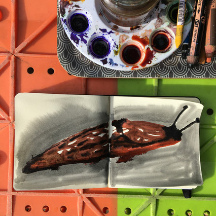 Watercolour Sketchbook Drawing of slug by Jo Blaker