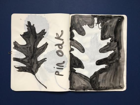 Observational Sketchbook Drawing of Leaves by Jo Blaker