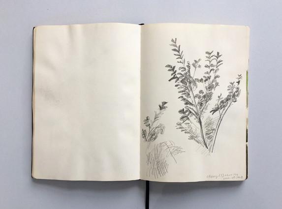Observational Sketchbook Drawing of Foliage by Jo Blaker