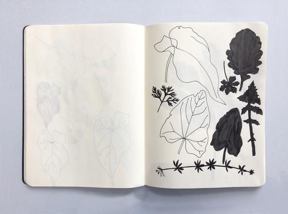 Botanical Observational Sketchbook Drawing by Jo Blaker