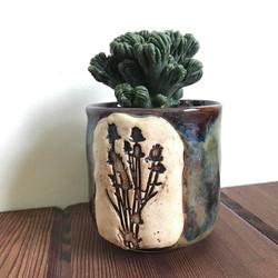 cactus plant holder