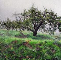 Appalachian Apple Orchard