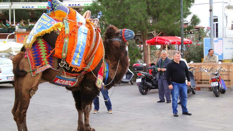 kameel met man2.jpg