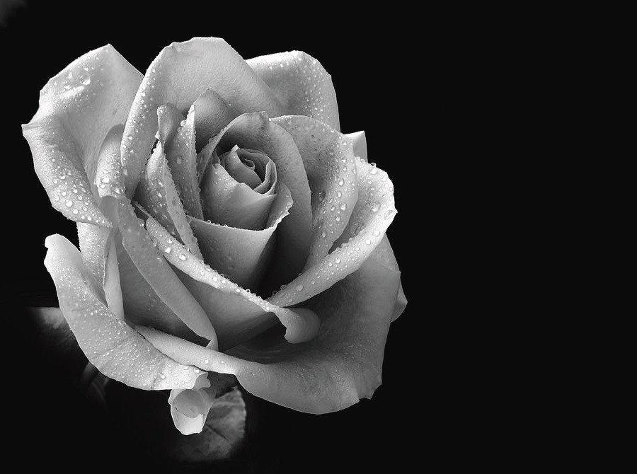 floristry houston