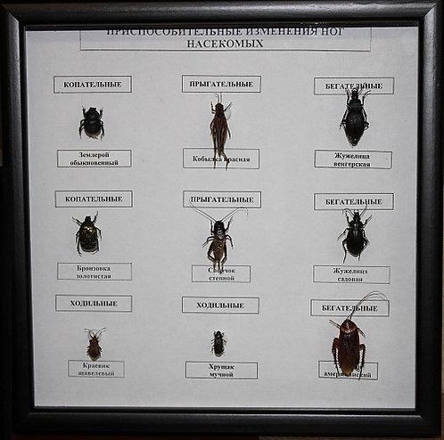 Коллекция Приспособительные изменения ног насекомых (Формы конечностей насекомых