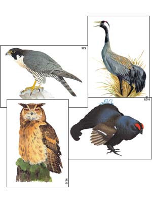 """Модель-аппликация """"Разнообразие высших хордовых 1. Пресмыкающиеся и птицы"""""""