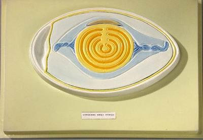 Барельефная модель Строение яйца птицы