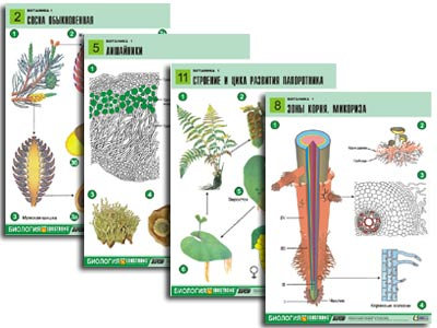 "Комплект таблиц по биологии дем. ""Ботаника 1"" (12 табл., формат А1, лам.)"
