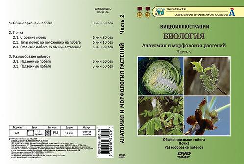 DVD Анатомия и морфология растений ч. 2 (Общие признаки побегов. Разнообразие по