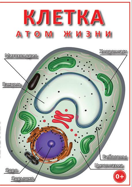 DVD Клетка - атом жизни