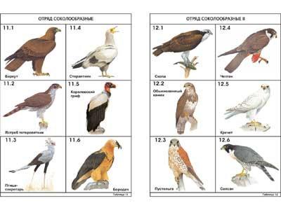 """Комплект таблиц по зоологии раздат. """"Разнообразие животных. Птицы."""" (цвет.,лам.)"""