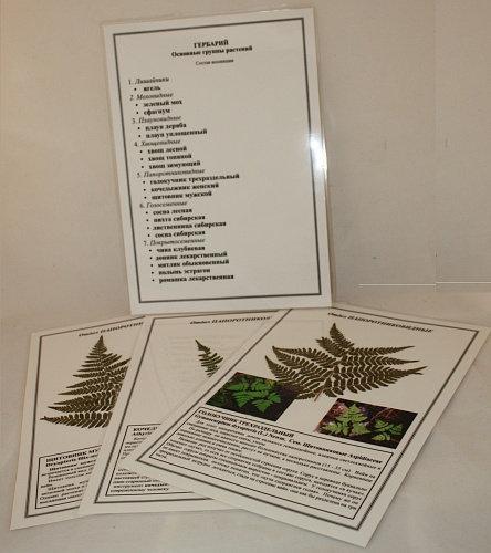 Гербарий Основные группы растений (ламинированный)
