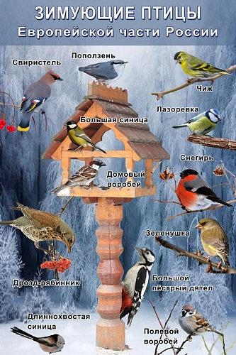 Таблица Зимующие птицы 1000*1400 винил