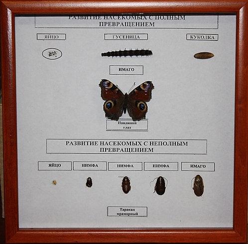 Коллекция Развитие насекомых с неполным и полным превращением