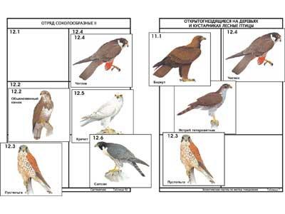 """Комплект дидактических карточек: """"Систематика и экология птиц"""" (95 шт., цвет., л"""