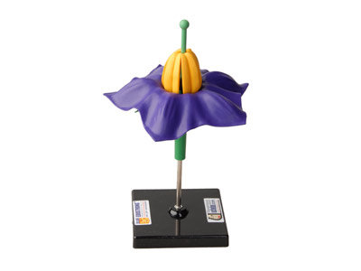 Модель цветка картофеля