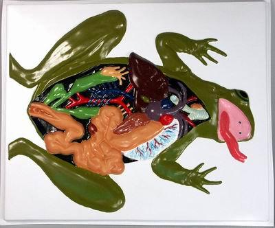 Барельефная модель Внутреннее строение лягушки