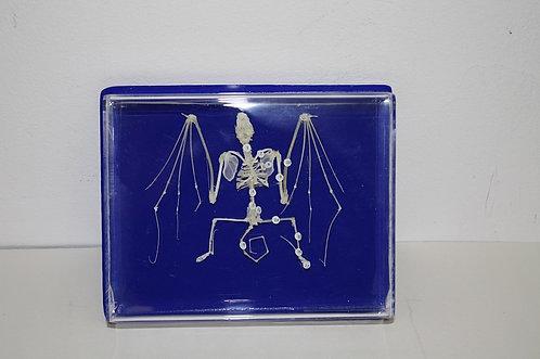 Скелет летучей мыши