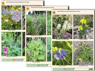 """Комплект таблиц по ботанике раздат. """"Многообразие растений. Придорожные и сорные"""
