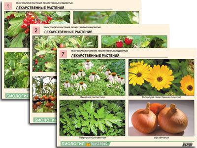 """Комплект таблиц по ботанике раздат. """"Многообразие растений."""