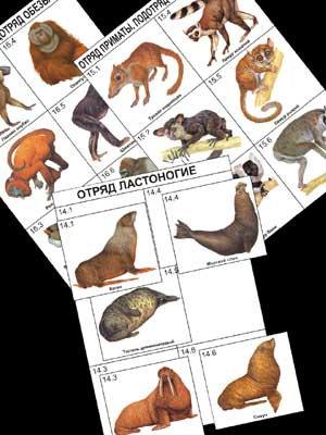 """Комплект дидактических карточек: """"Систематика и экология млекопитающих"""" (96 шт)"""