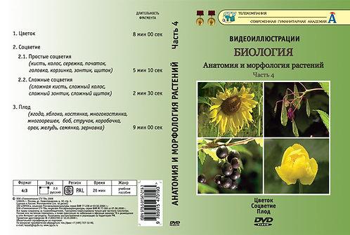 DVD Анатомия и морфология растений ч. 4 (Цветок, соцветие, плод)