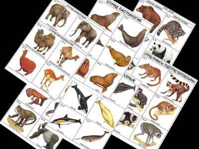 """Комплект таблиц по зоологии раздат. """"Разнообразие животных. Млекопитающие."""""""