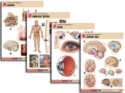 """Комплект таблиц по биологии дем. """"Человек и его здоровье 2"""" (10 табл., формат А1"""