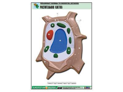 """Рельефная таблица """"Растительная клетка"""" (формат А1, матовое ламинир.)"""