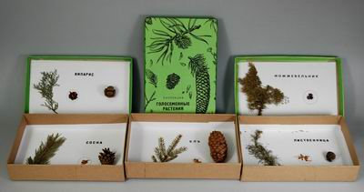 Коллекция Голосемянные растения