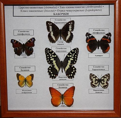 Коллекция Семейство бабочек