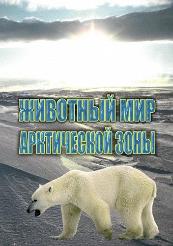 DVD Животный мир Арктической зоны