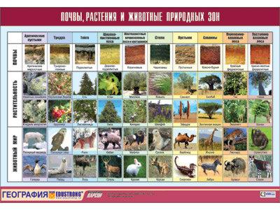 """Таблица демонстрационная """"Почвы, растения и животные природных зон"""""""