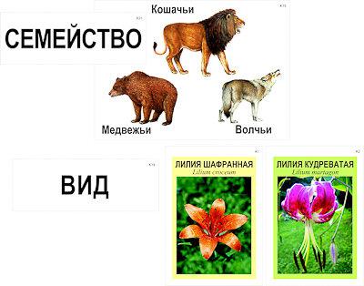 """Модель-аппликация """"Классификация растений и животных"""" (ламинированная)"""