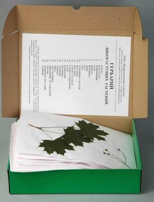 Гербарий Дикорастущие растения (28 видов)