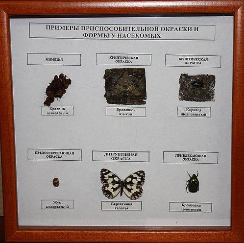 Коллекция Примеры приспособительной окраски и форм у насекомых