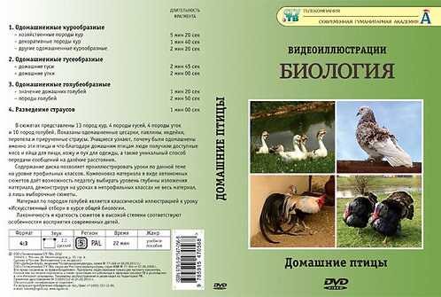 DVD Домашние птицы