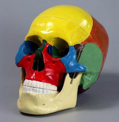 Череп человека с раскрашенными костями