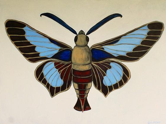 Blue Hummingbird Moth